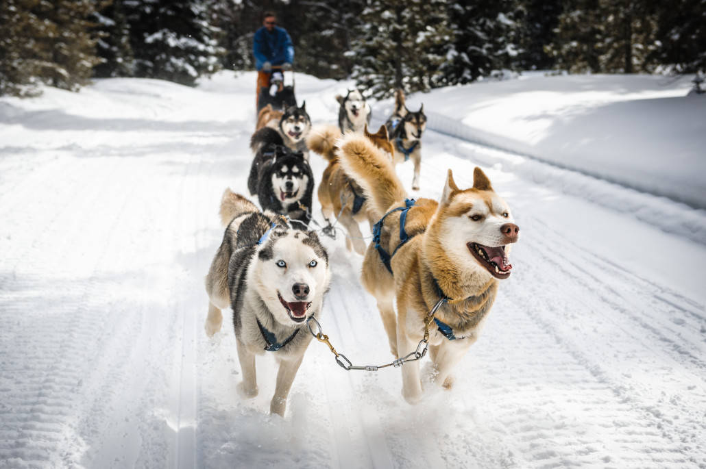 Dog Sledding Near Ottawa