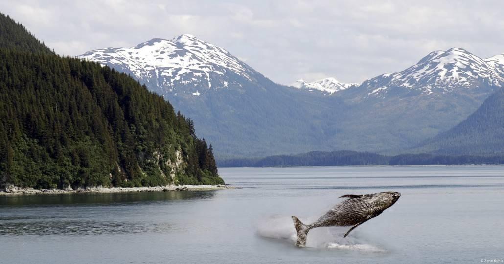 Natural History Of Alaska