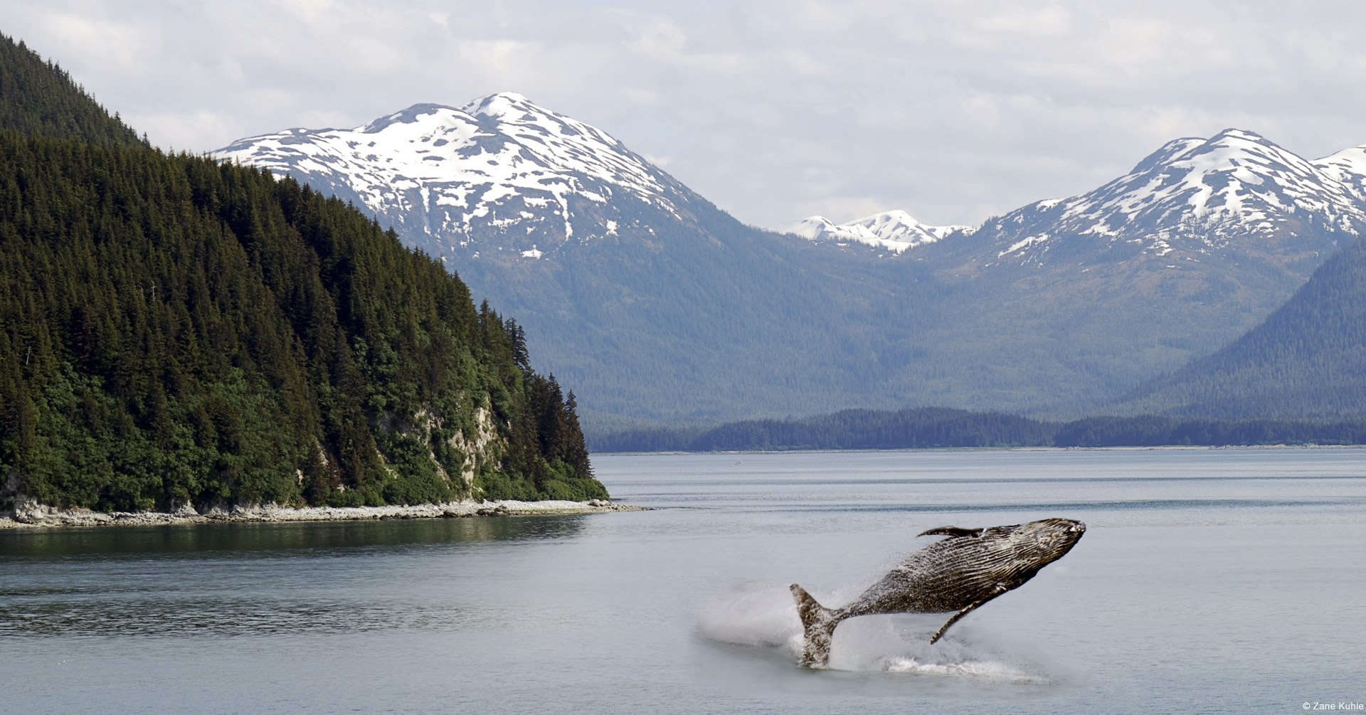 Take A Nature Tour Of Alaska Avis Alaska